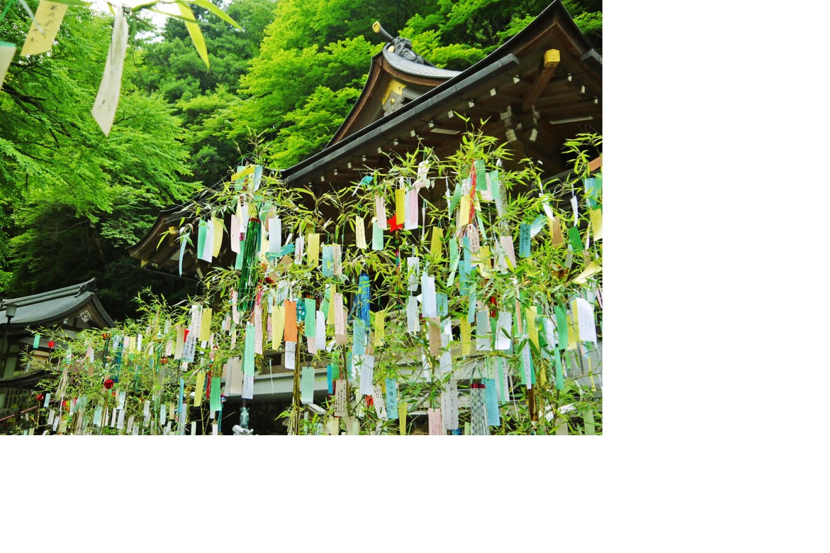 七夕・Tanabata